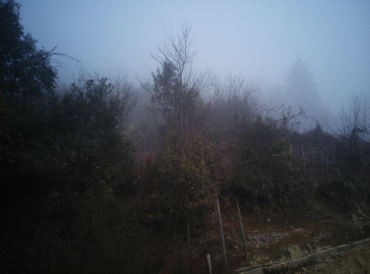 Misty views.jpg