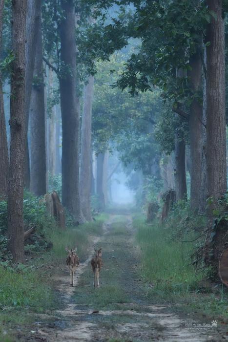 Morning-walk-ISO-4000.jpg