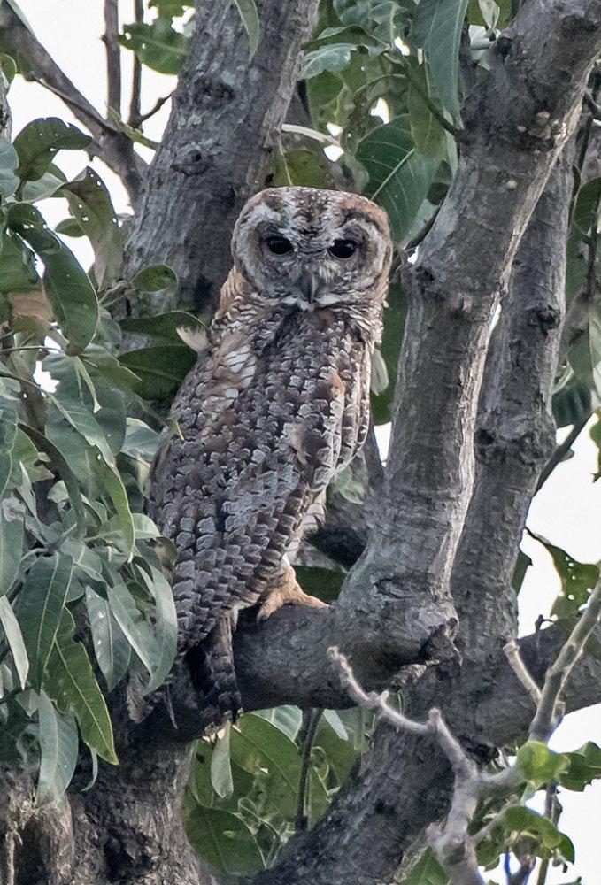 MW Owl Bangalore July 2019_4243.jpg
