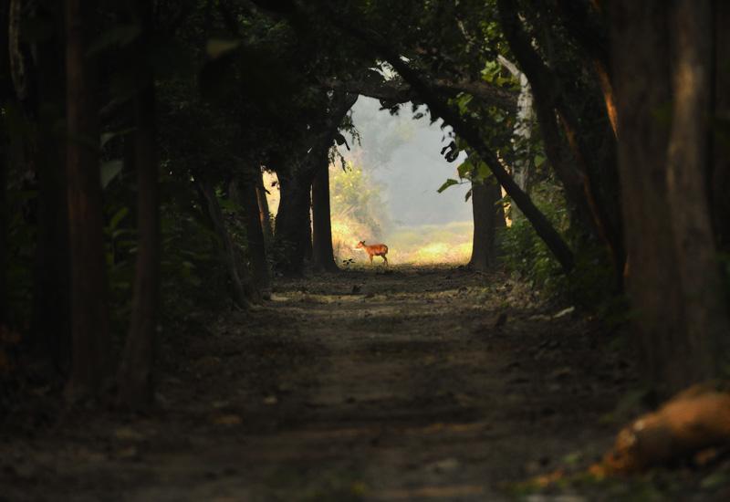 Nilanjan-Ray_Animal_Environment2.jpg