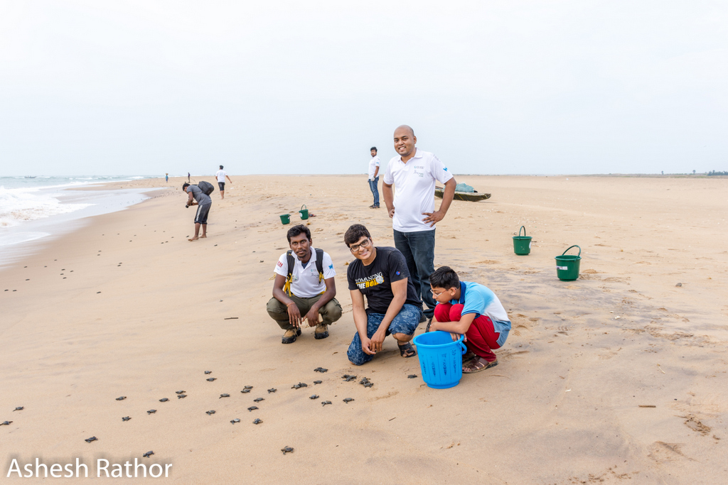 olive ridley hatching (119 of 369).jpg