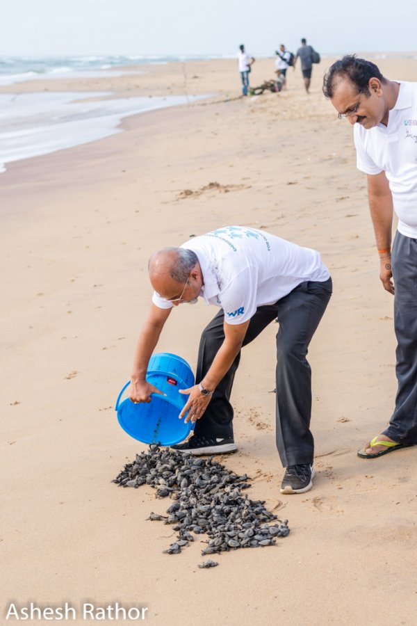 olive ridley hatching (176 of 369).jpg