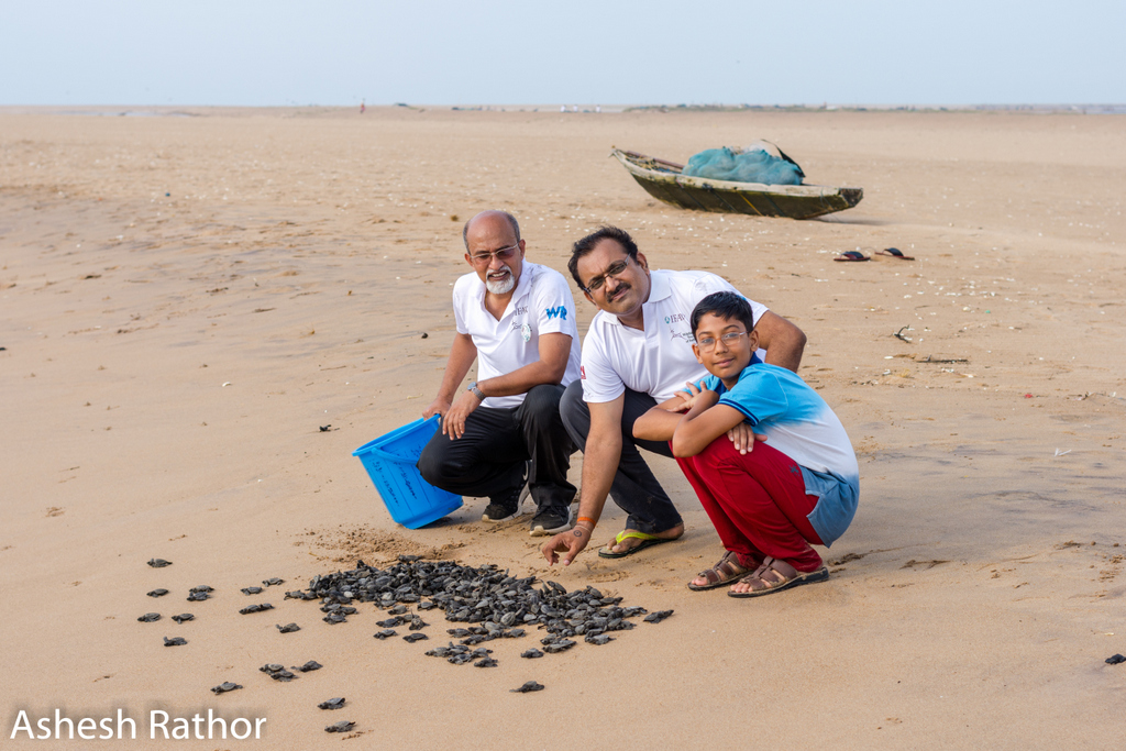 olive ridley hatching (179 of 369).jpg