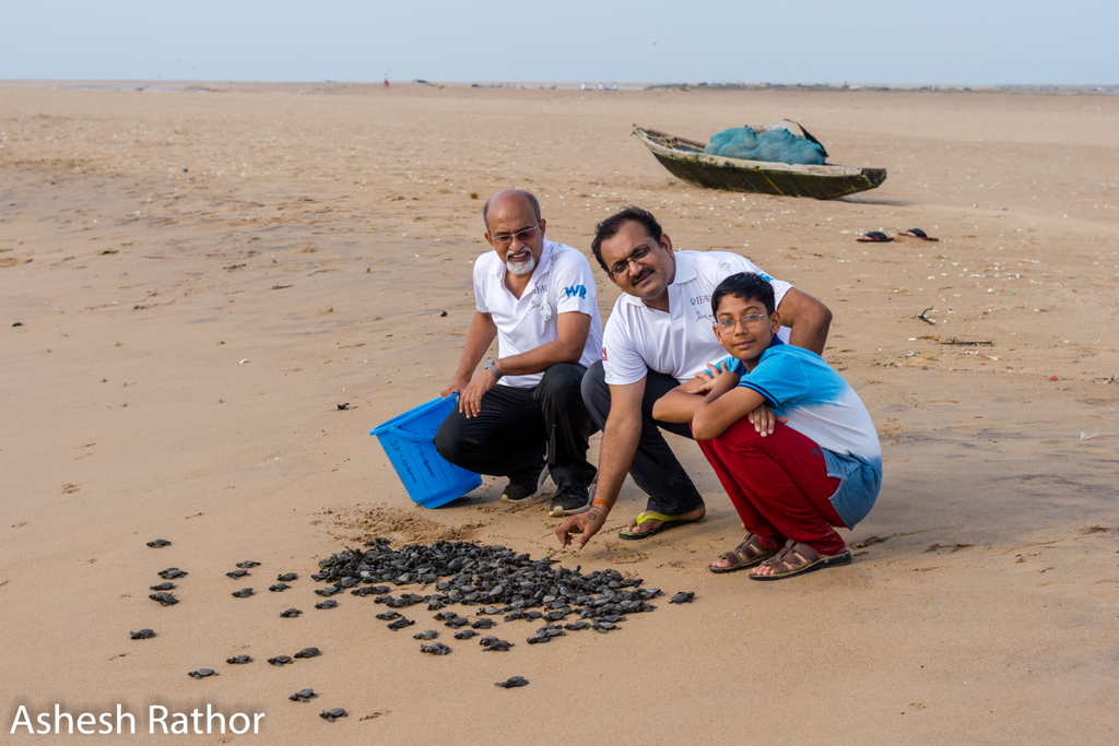 olive ridley hatching (182 of 369).jpg