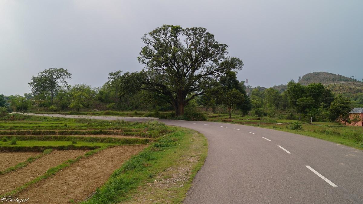 on the way to narkanda,jan15 (1 of 1)-2.jpg