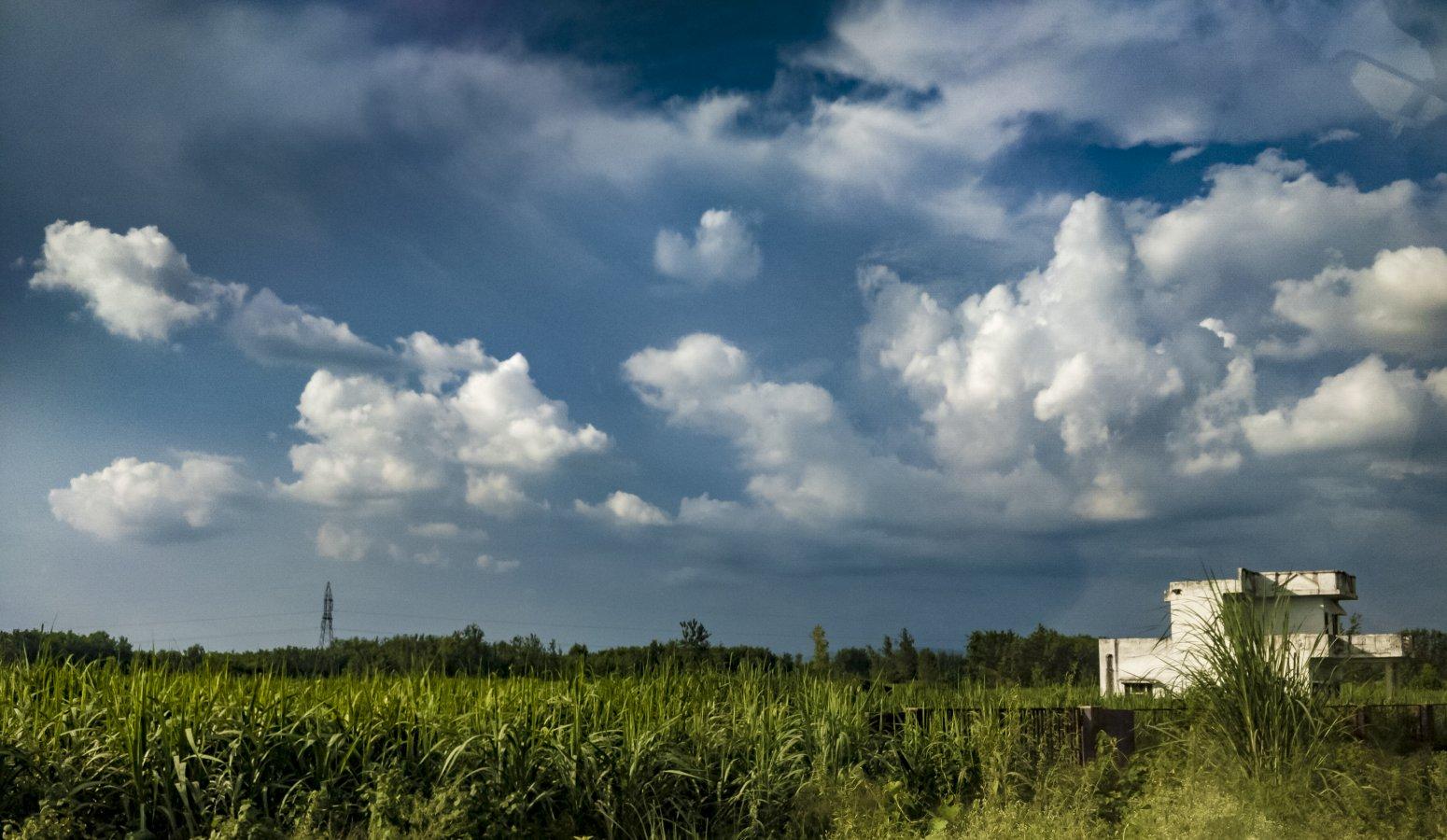 SKY & GRASS.jpg