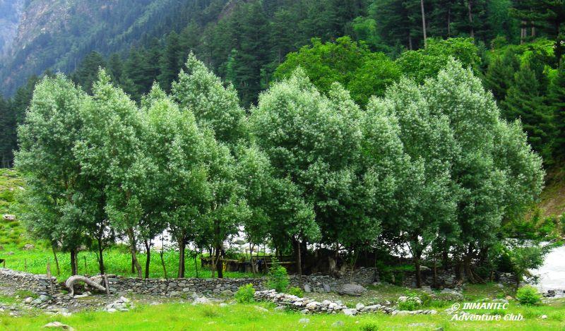 Sonmarg-SrinagarGreen.JPG