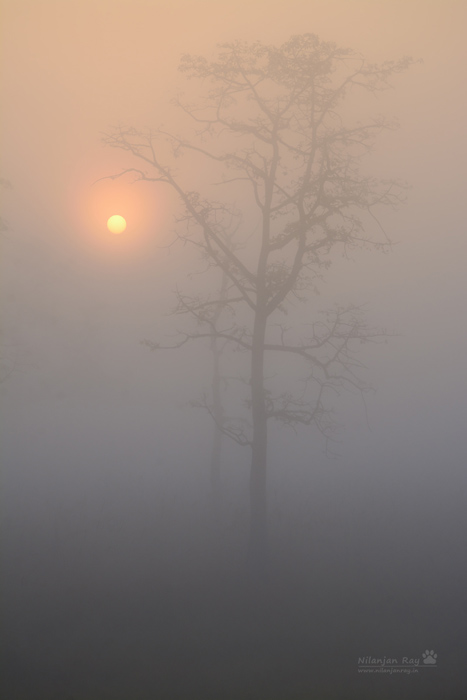 Sunrise-from-the-forest-rest-house.jpg