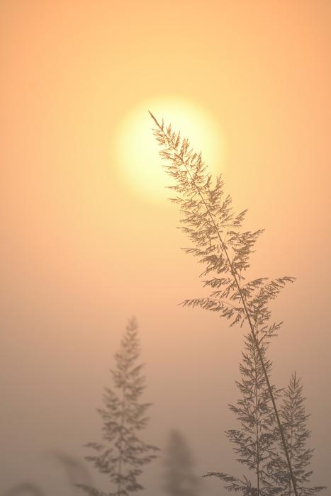 Sunrise_top-of-a-grass-stalk.jpg
