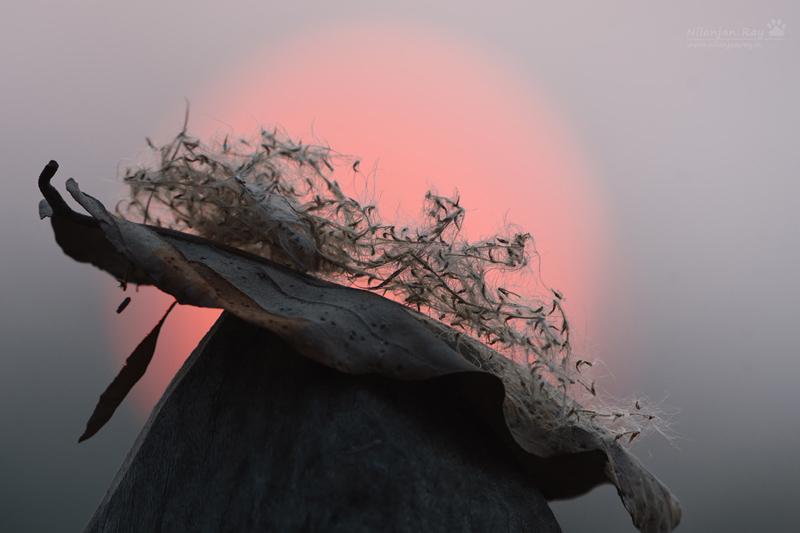 Sunset_bridge_pillar.jpg