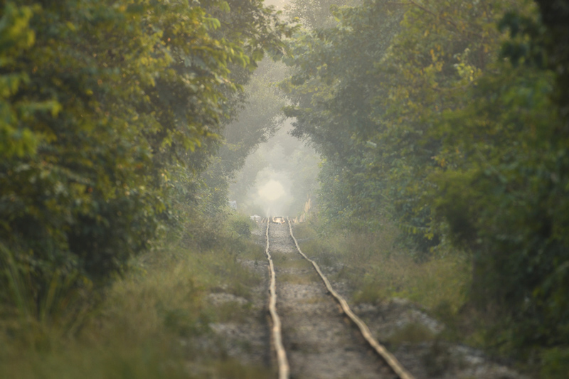 Trainline-through-the-forest2.jpg