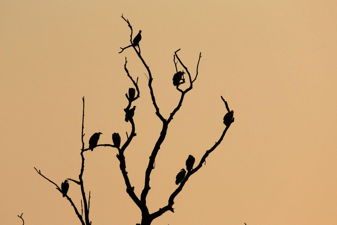 VulturesIMG_7254.jpg