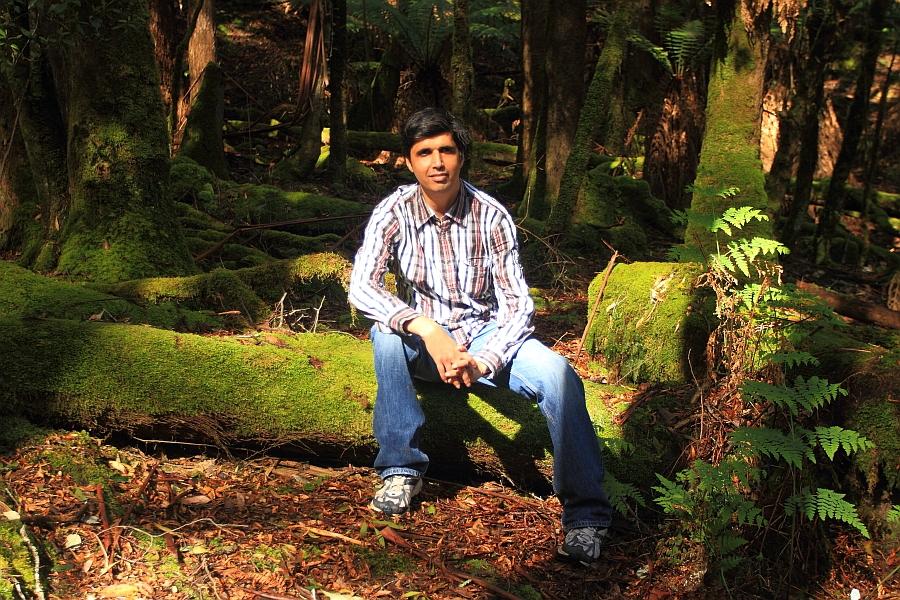 WoodsOfLothlorien.jpg